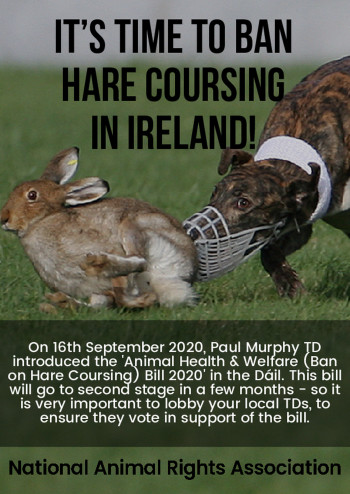 It's Time to Ban Hare Coursing in Ireland